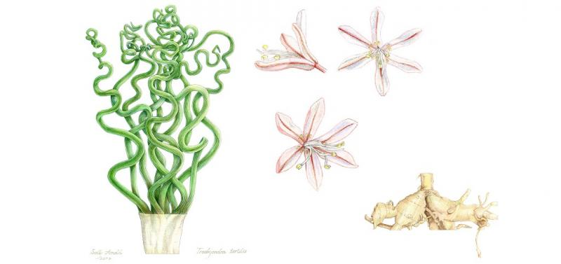Einführung in das botanische Zeichnen